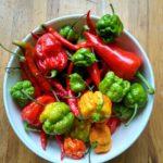 skal-med-olika-starka-chilis